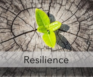The purpose of this article is to outline how Opsis Consulting can help your business become more resilient